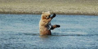 10 Funny Grizzly Bear Pictures That Are Hilarious