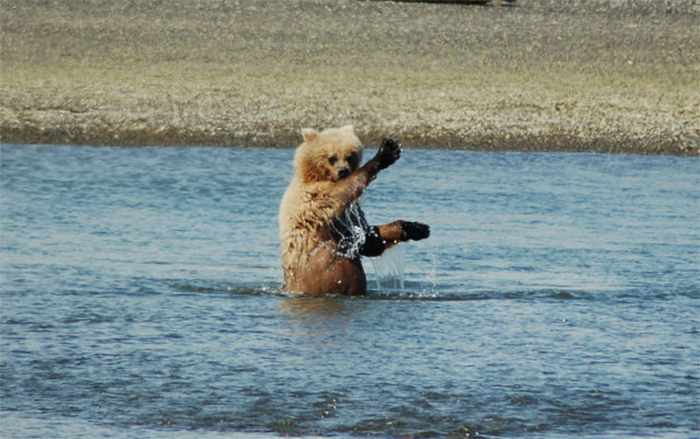 10 Funny Grizzly Bear Pictures That Are Hilarious -05
