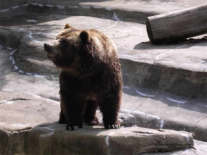 10 Funny Grizzly Bear Pictures That Are Hilarious -10