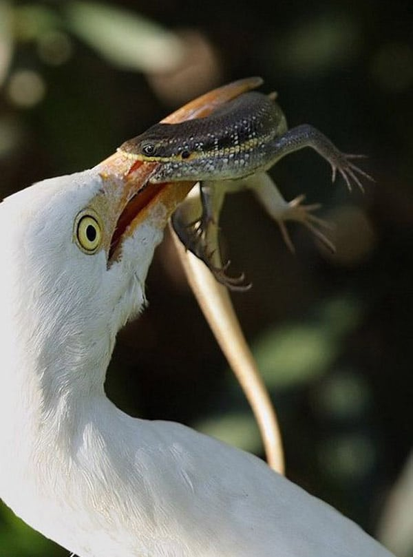 Yummy Breakfast Time of Bird Will Blow Your Mind
