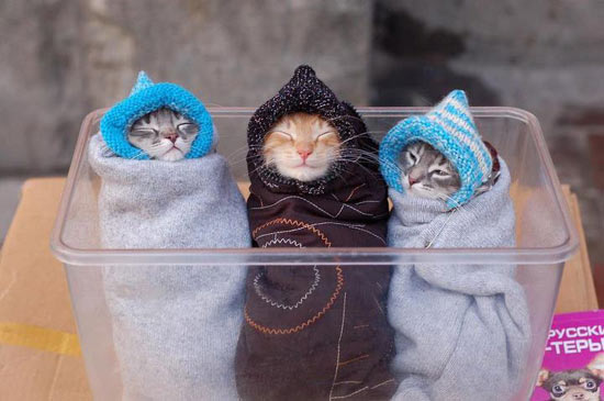 Funny Cats Suffering Cold