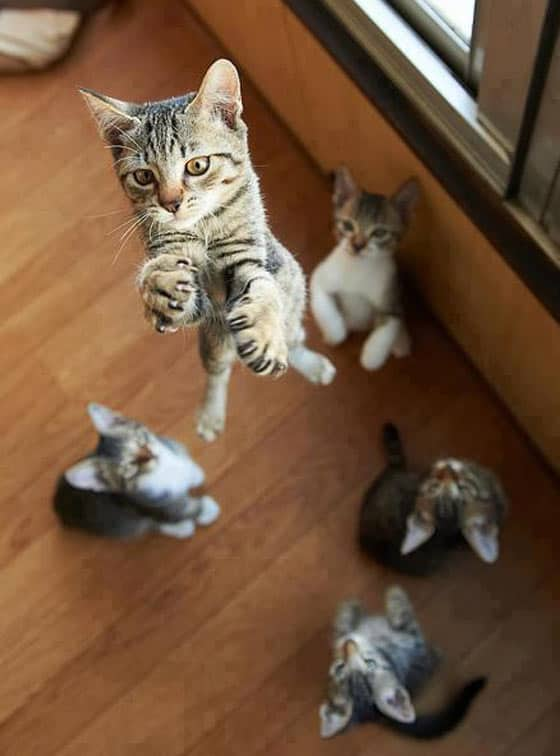 Funny Cat's High Jump Will Blow Your Mind