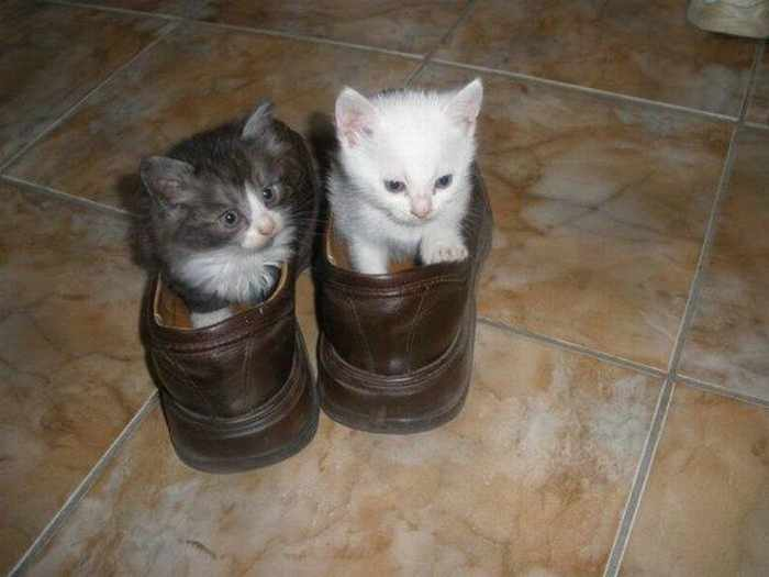 8 Awesome Funny Pictures of Cute Kittens -04