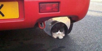 Funny Kitty In Muffler (Silencer)
