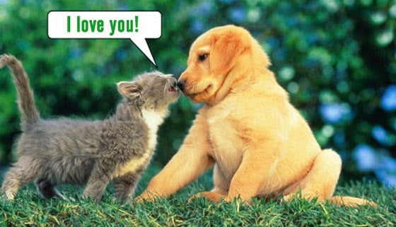 Funny Love of Dog and Cat Will Shock You