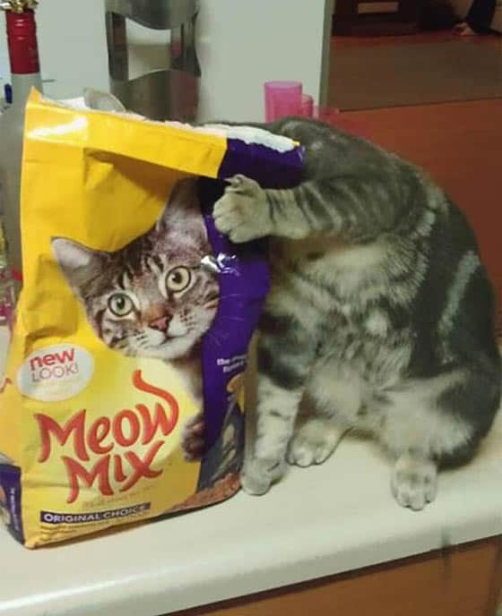 Funny Cat Meow Mix New Look is Hilarious