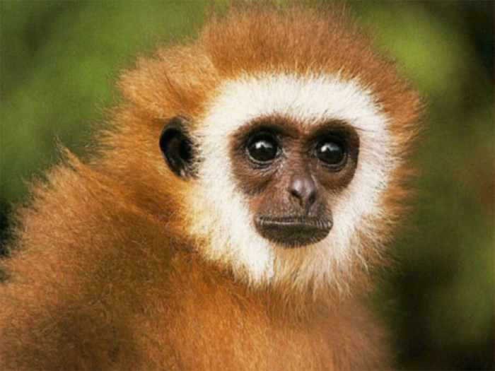 8 Funny Pictures of Monkeys -02