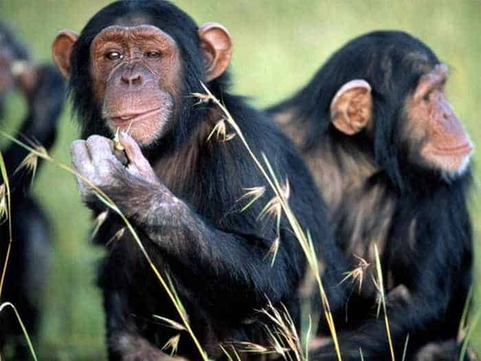 8 Funny Pictures of Monkeys -03