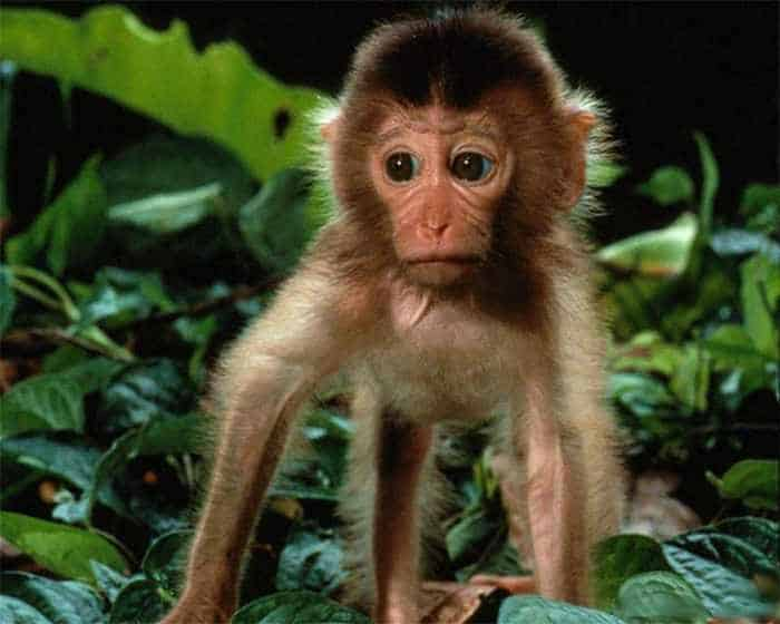 8 Funny Pictures of Monkeys -04