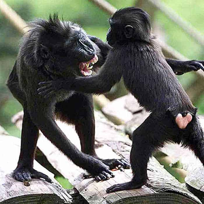 8 Funny Pictures of Monkeys -06
