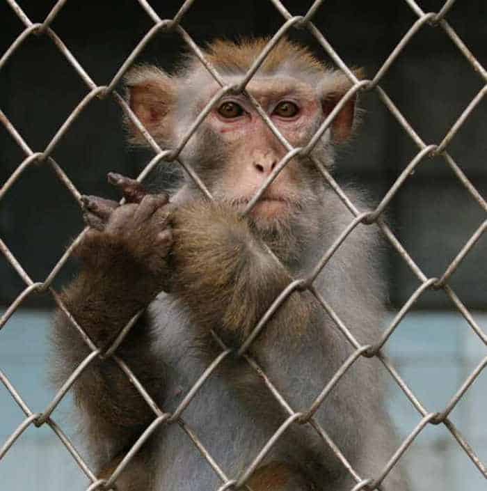8 Funny Pictures of Monkeys -08