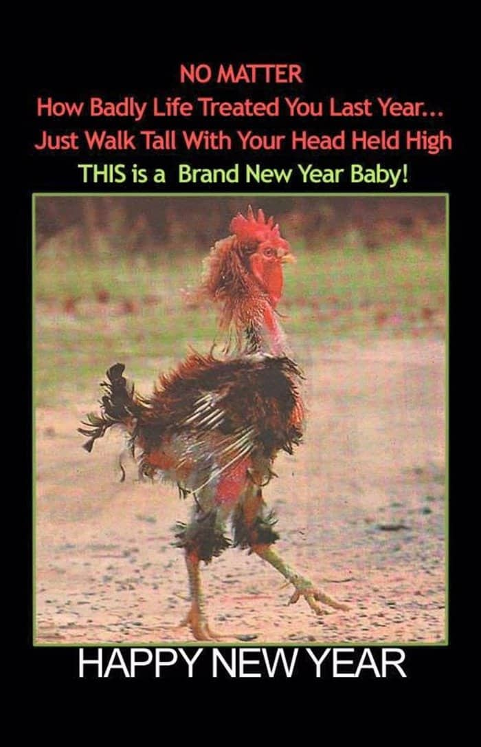 Funny New Year Wishes, Quotes, Pictures and Resolutions - 45 Pics -03