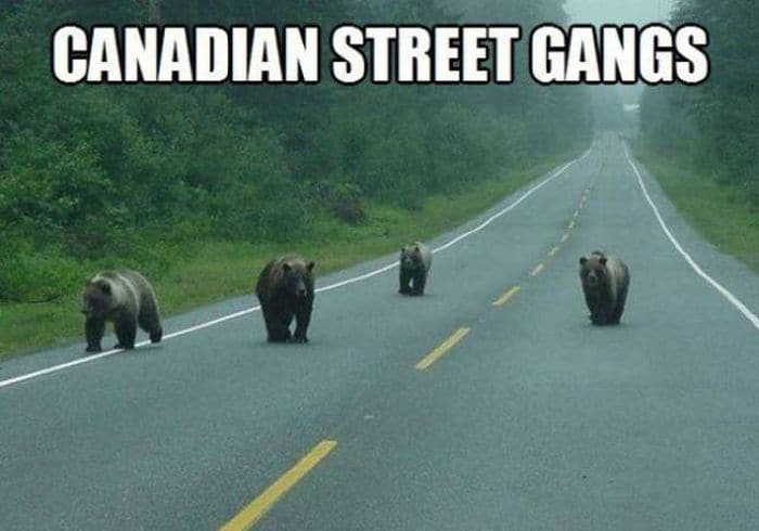 50 Funny Only in Canada Pictures That Will Make Your Day -15