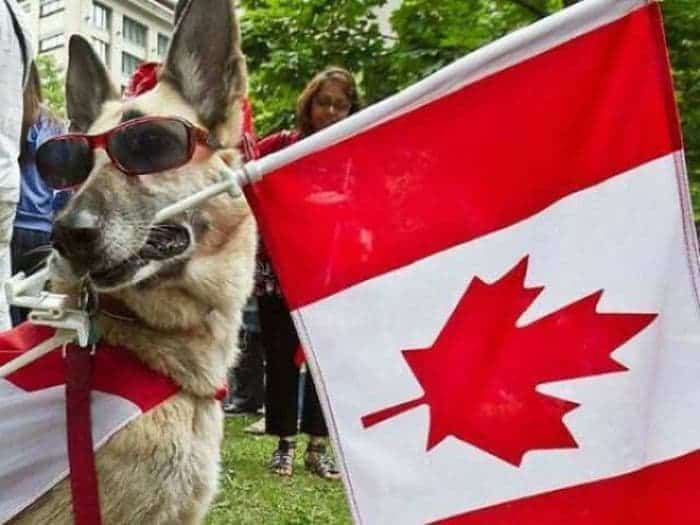 50 Funny Only in Canada Pictures That Will Make Your Day -25