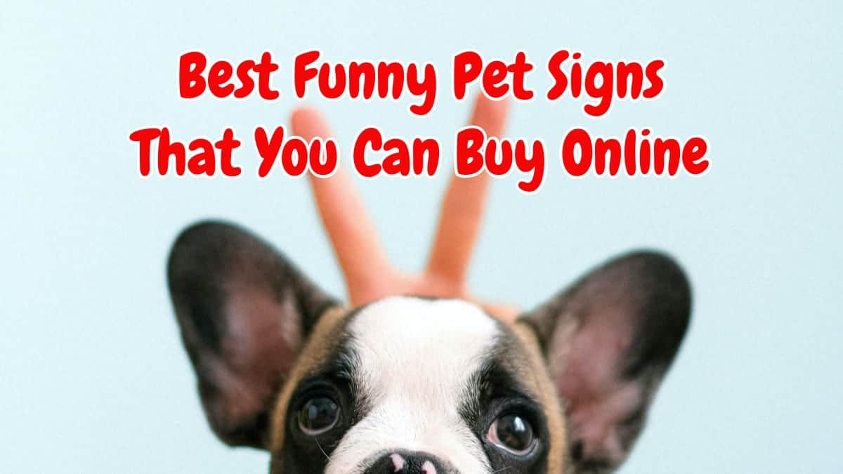 Best Funny Pet Signs That Will Make Your Mood