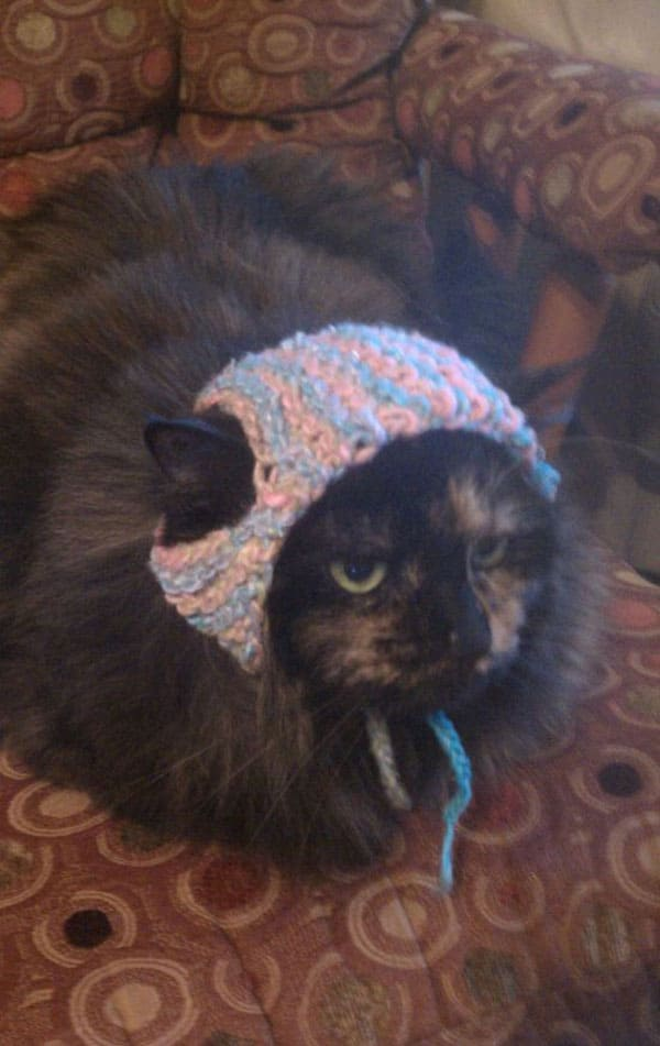 Old Kitty Suffering From Cold