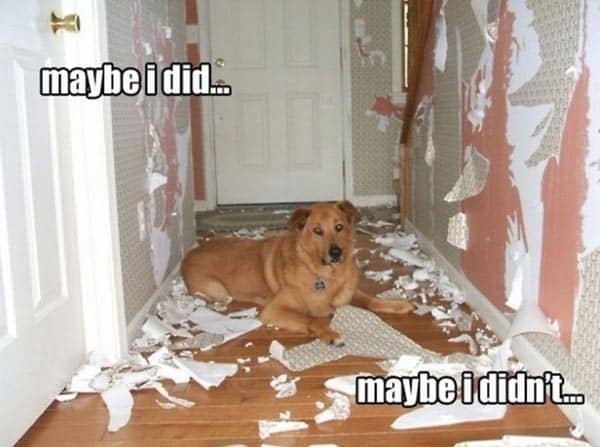 Innocent Dog That Will Make You Laugh