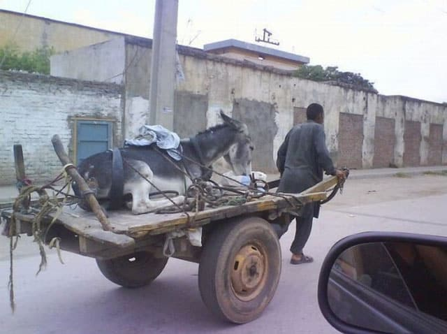 funny-picture-donkey-cart