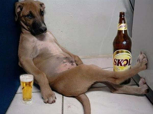 Sad Dog Wants To Drink More - Funniest Drunk Dog
