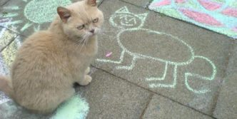 Unhappy Cat That Don't Like the Cat Portrait