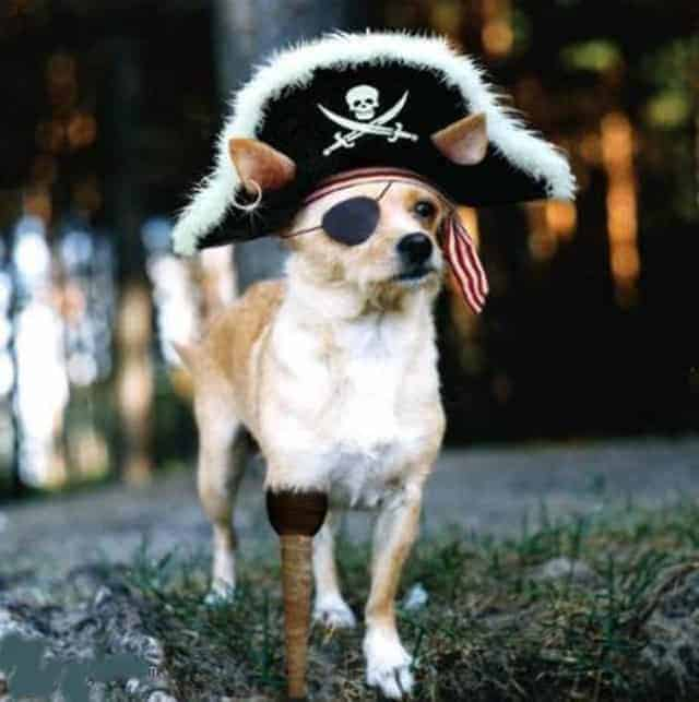 Funny Picture Of Weird Dog That Look alike Jack Sparrow