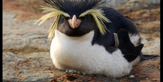 Unseen and Funny Punk Penguin Meme