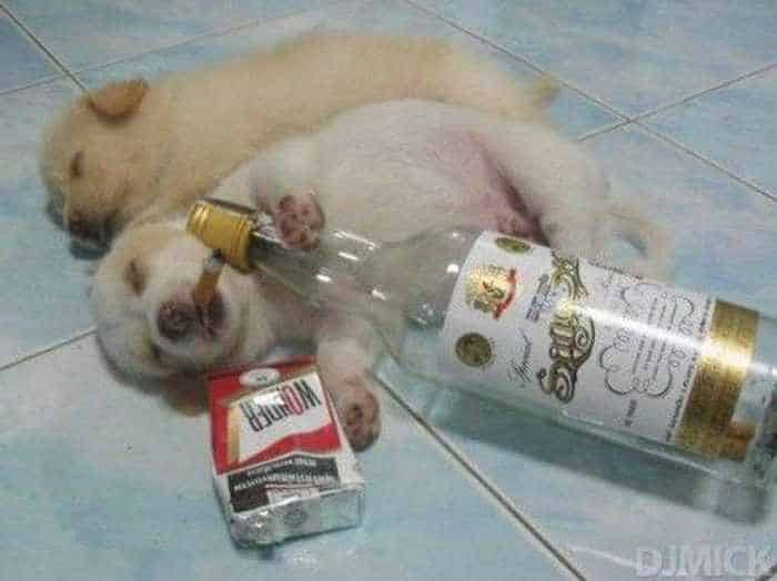 4 Funny Pictures of Puppies Enjoying Party-01