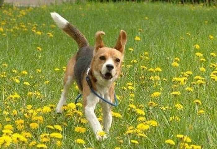 Funny Puppy Playing In Garden - 3 Photos -01