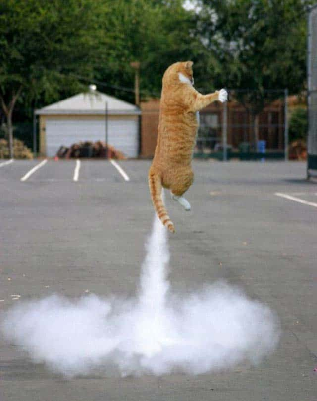 Funny Rocket Cat That Will Make Your Day