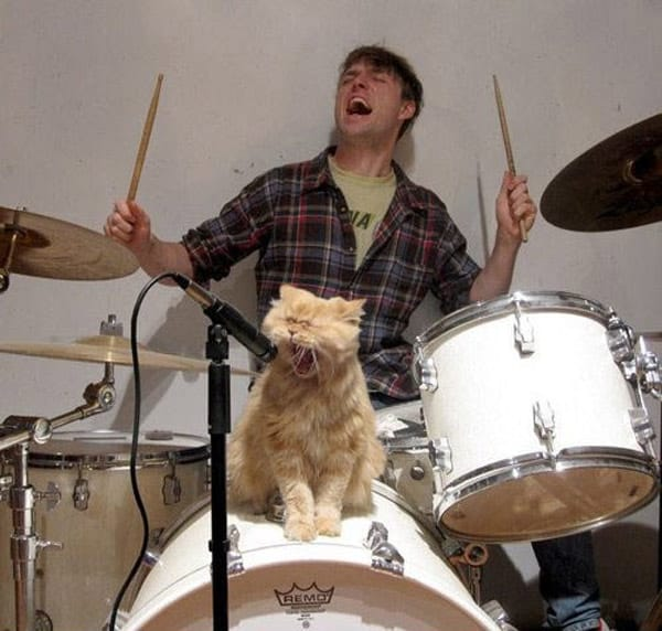 Rockstar Cat Band That You Want in Your Party