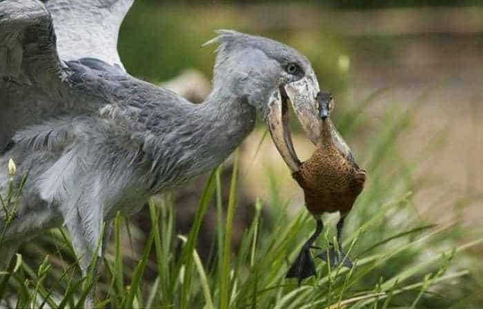 Funny Birds That Also Have Their Territory -03