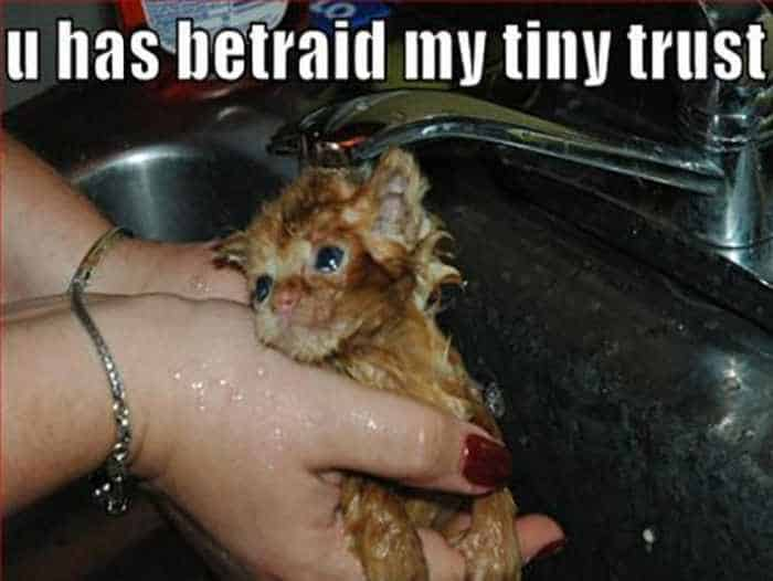 30 Funny Sink Pictures That Will Make Your Day - 30 Photos -18