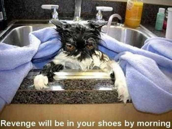 30 Funny Sink Pictures That Will Make Your Day - 30 Photos -25