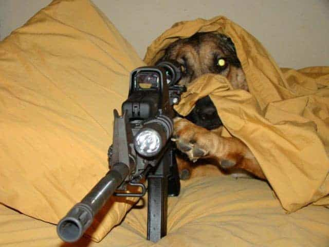 Funny Sniper Dog Of The Day