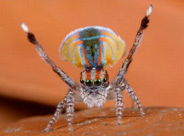funny-spider_01