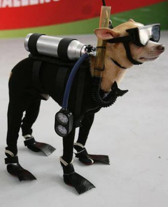 Funny Dog Ready For Underwater Swimming