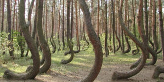 Funny Forest Of Weird Trees