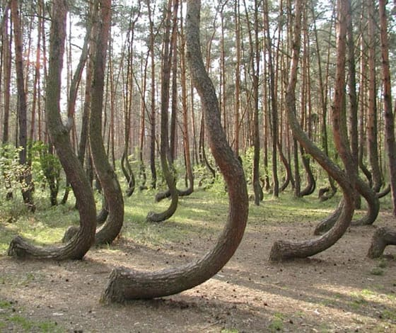 Funny Forest Of Weird Trees That You Never Seen Before