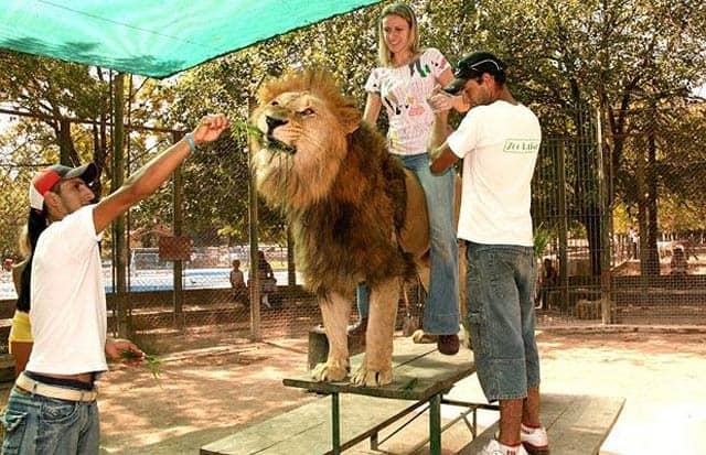 Funny And Dangerous Riding at Lujan Zoo in Argentina -03