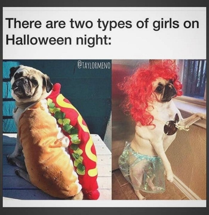 There Are Two Types Of Girls On Halloween Nights (29 Photos)-19