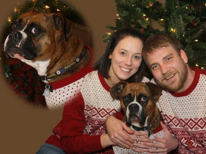 20 Hilarious Christmas Portraits With Pets That Will Make Your Day -12