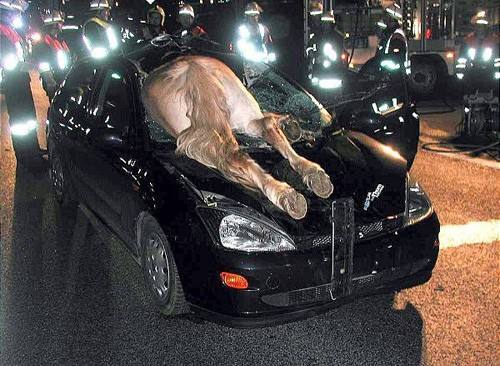 Unbelievable Accident Of Car With Horse