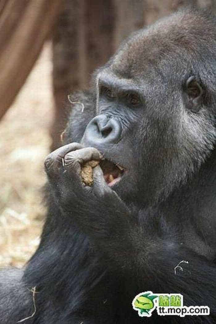 9 Funny Pictures of Very Hungry Monkey -09