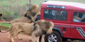 Meanwhile in Africa (34 Funny Pictures)