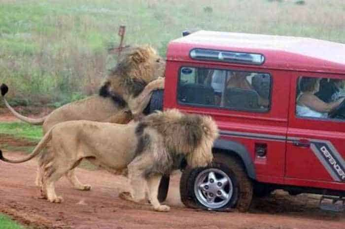 Meanwhile in Africa - 34 Funny Pictures -09