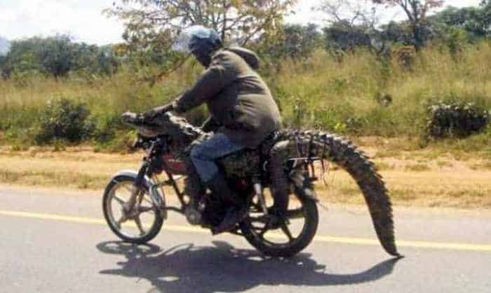 Meanwhile in Africa - 34 Funny Pictures -13