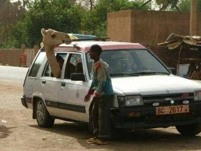 Meanwhile in Africa - 34 Funny Pictures -23
