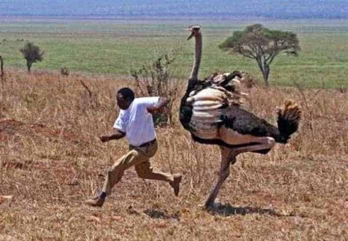 Meanwhile in Africa - 34 Funny Pictures -30