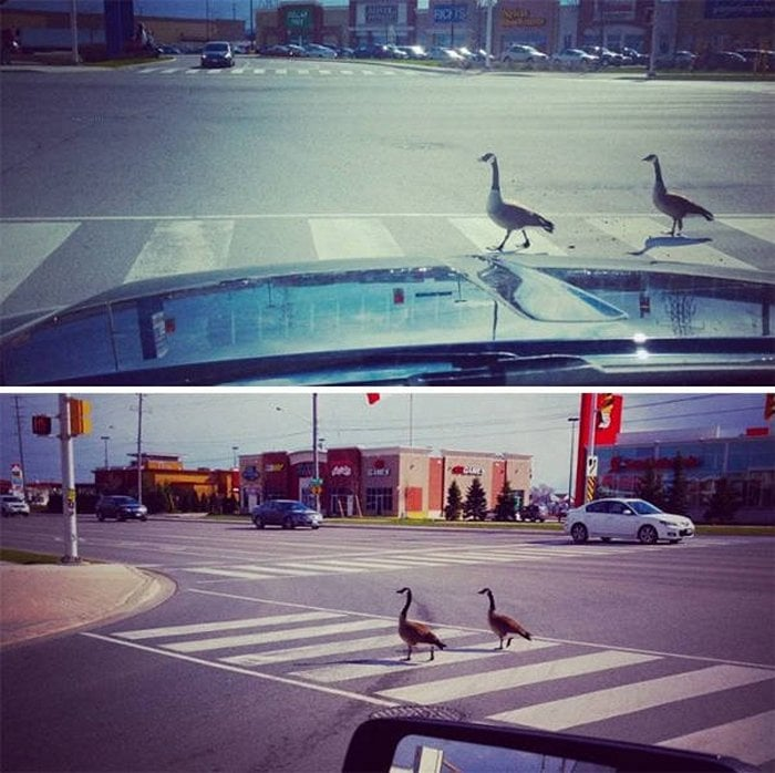 Meanwhile In Canada - 50 Funny Canadian Life Photos-14