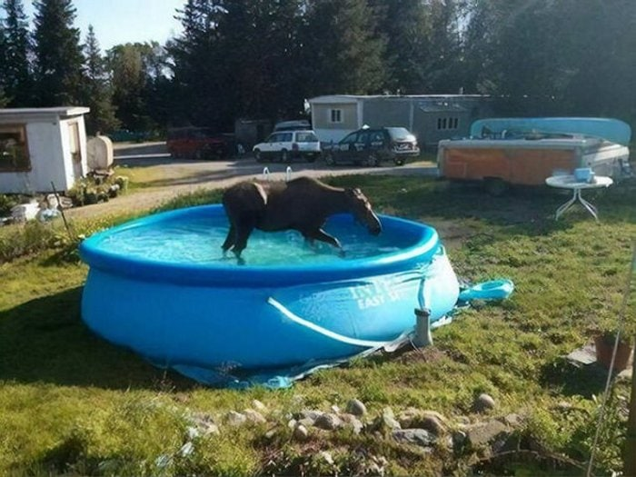 Meanwhile In Canada - 50 Funny Canadian Life Photos-16